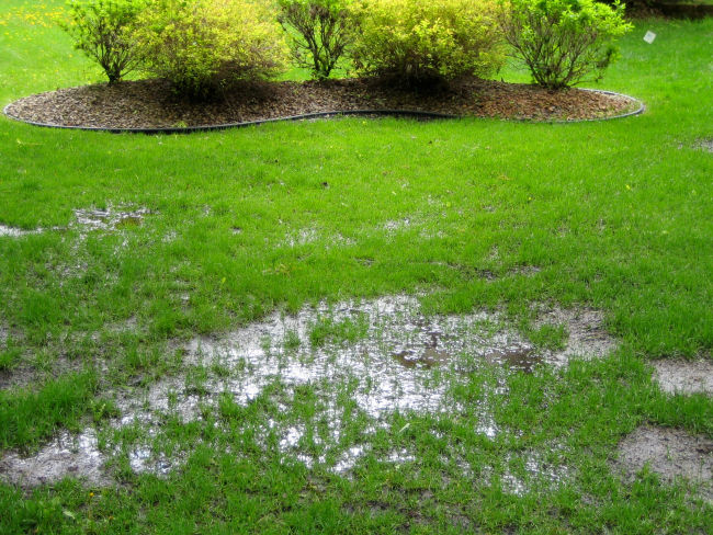 Residential yard with standing water in the grass
